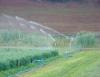 Irrigação na agricultura orgânica