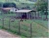 Piquete reduz custos com a alimentação na avicultura