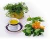 Fármacia viva - utilização de plantas medicinais