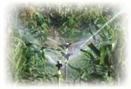 A irrigação deve ser feita com o objetivo de aumentar o lucro, com o aumento da produção, em quantidade e qualidade.