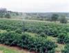 Quimigação aplica produtos químicos via irrigação