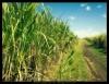 Pesquisadores criam coquetel para produção de biodiesel