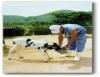 Produção de vitelos, uma alternativa para aumentar a renda do produtor de leite