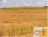 Plantio direto traz benefícios ambientais e ao produtor