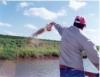 Arraçoamento adequado diminui a variação de tamanho entre os peixes
