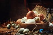 Ovo de galinha ou ovo de codorna, qual consumir?
