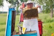 Dicas para a criação de abelhas
