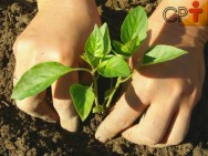 Dica de excelente negócio? Plante, processe e comercialize pimentas!