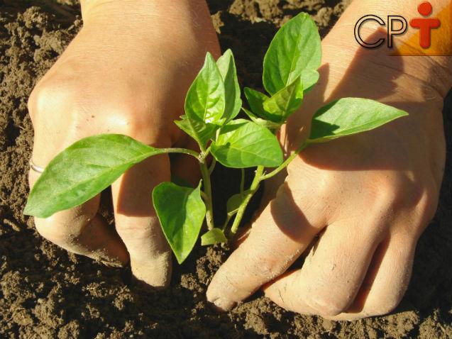 Dica de excelente negócio? Plante, processe e comercialize pimentas!   Artigos Cursos CPT