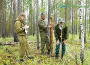 Restauração ambiental: adubação de espécies vegetais nativas