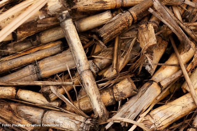 Conheça as vantagens e desvantagens da biomassa