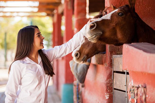 Aproximação de cavalos