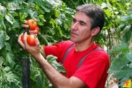 Três dicas para quem deseja cultivar tomate
