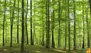 Negócio rural: recuperação de florestas