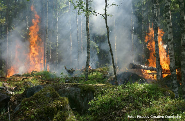 Como combater e impedir queimadas