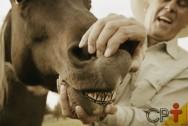 Vai comprar um cavalo? Avalie a idade pelos dentes!