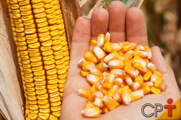 Posso usar sementes tratadas na produção de milho hidropônico?   Artigos Cursos CPT