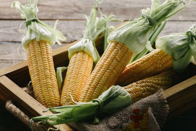 Vai comercializar milho verde? Saiba mais sobre ele, então!   Artigos Cursos CPT