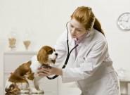 Clínica veterinária: vantagens da padronização dos processos