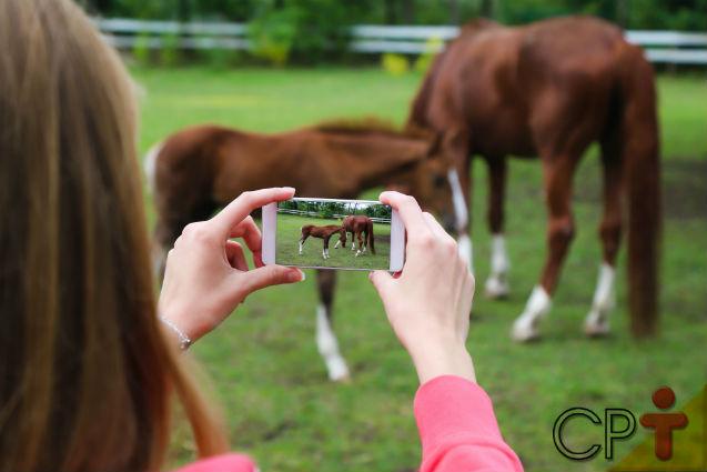 Vai comprar cavalo pela internet? Antes, leia essa matéria!   Artigos Cursos CPT