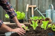 Dicas para montar uma horta caseira