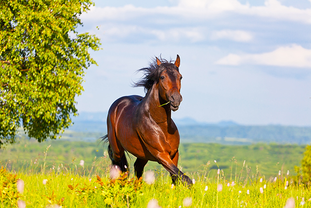Cavalo a pasto