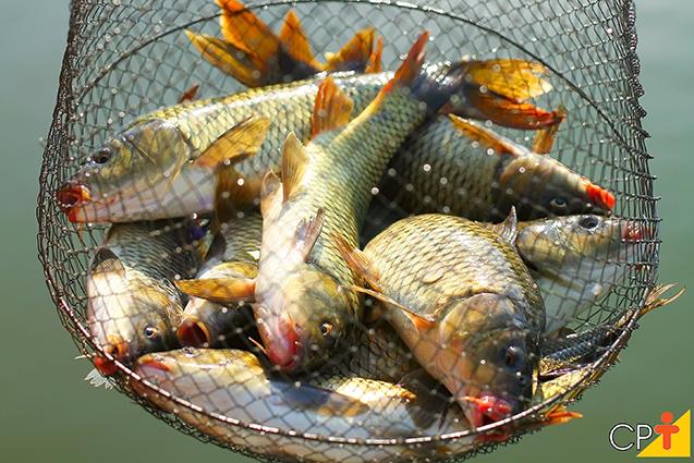 Peixes em rede