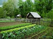 Como realizar a instalação de uma horta