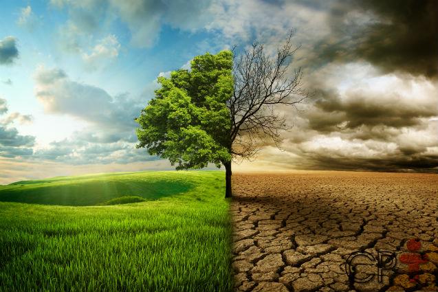 Contra a erosão do solo, 3 práticas de sucesso e inseparáveis!   Artigos Cursos CPT
