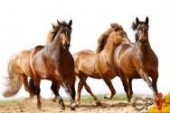 Vai comprar um cavalo? Faça a escolha certa!