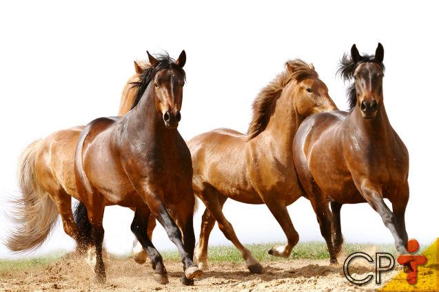 Vai comprar um cavalo? Faça a escolha certa!   Artigos Cursos CPT