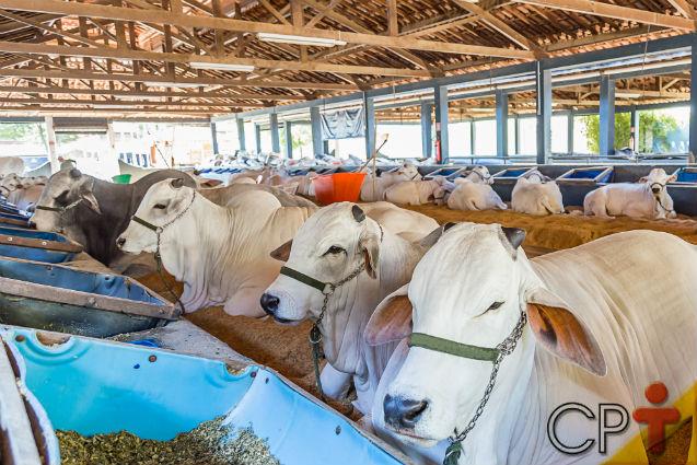 Bovinos de corte: alimentos utilizados no sistema de engorda   Artigos Cursos CPT