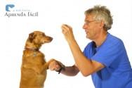 Qual o melhor momento para dar petiscos para os pets?