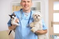 Existe pediatria para cães e gatos? Sim!