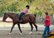 Você já ouviu falar do Volteio, modalidade olímpica equestre?