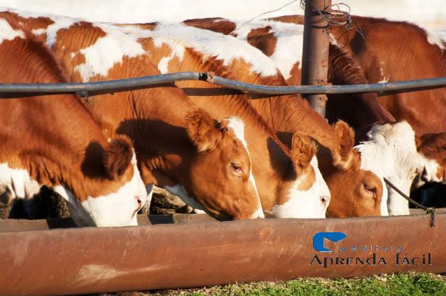 Descubra e as vitaminas e os minerais benéficos aos bovinos