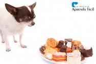 Intoxicação alimentar em cães: como agir?