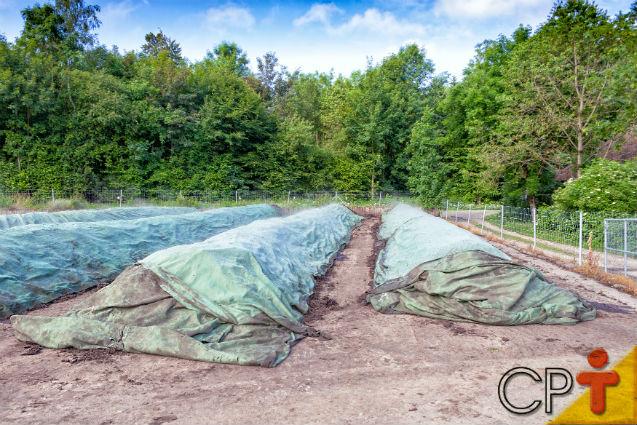 Especialista: Aproveitar os resíduos sólidos gerados na zona rural é possível   Notícias Cursos CPT