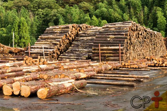 Especialista: o desmatamento é precursor dos impactos ambientais   Notícias Cursos CPT