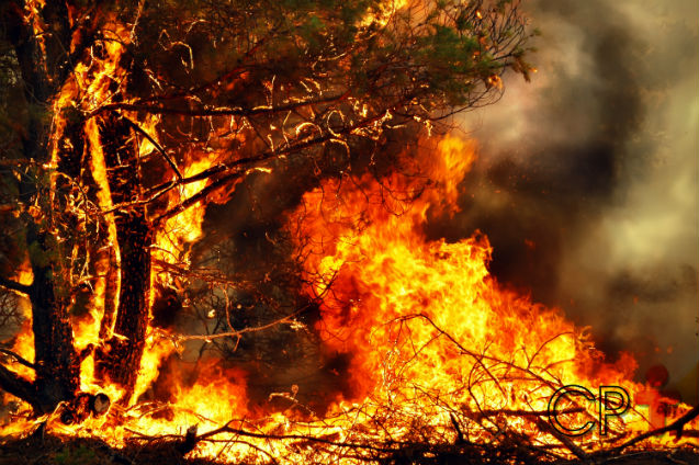Queimadas: conheça os impactos negativos sobre o meio ambiente   Artigos Cursos CPT
