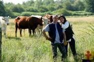 Vacas gostam de rotina? É verdade isso? SIM, é!