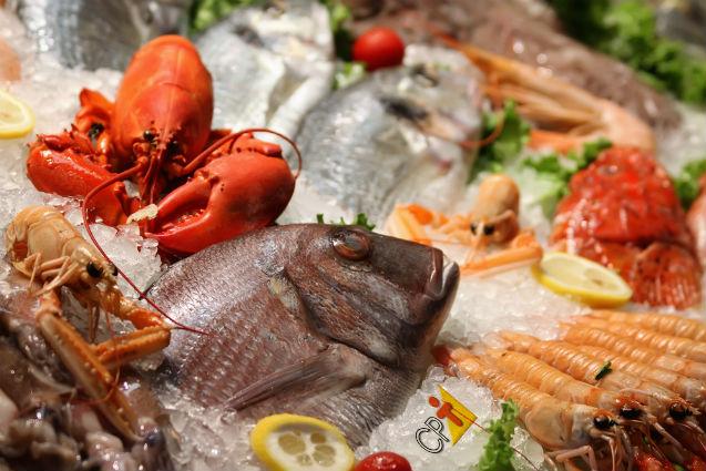 Vai processar pescados? Seu sucesso depende dessas dicas   Dicas Cursos CPT