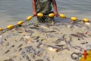 Sistema de produção de alimentos que mais cresce no mundo? A aquicultura!