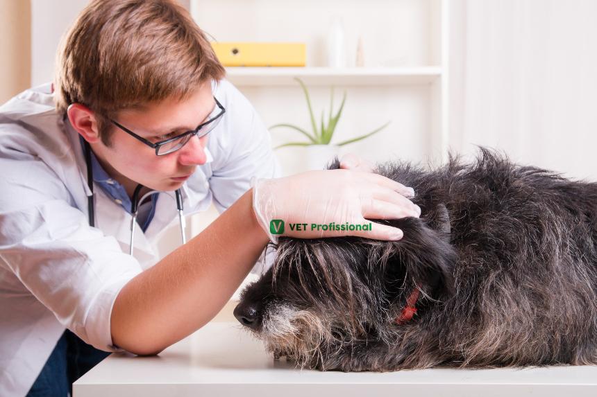 Cães: alergia e dermatite alérgica   Artigos VetProfissional