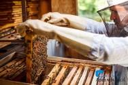 Como iniciar uma criação de abelhas?