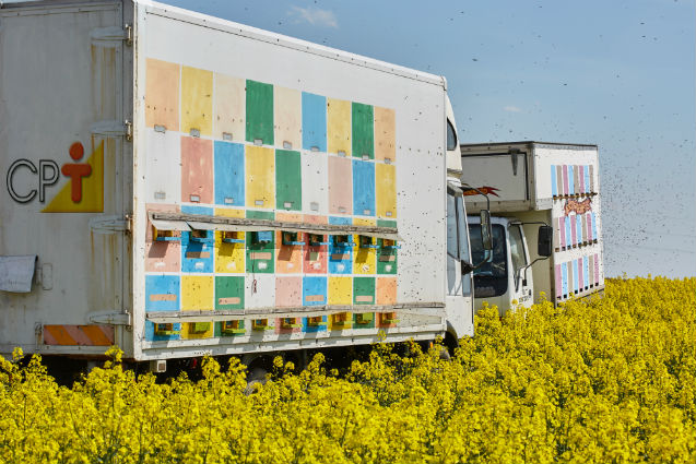 Quer mais mel? Leve as abelhas até as floradas!   Artigos Cursos CPT