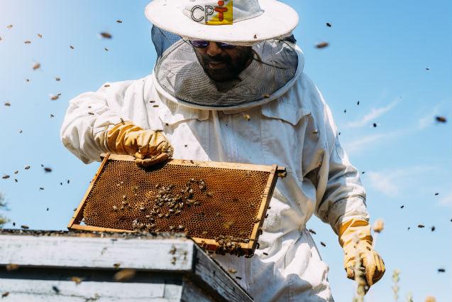 Vai trabalhar em apiário? Cuidado! Use a vestimenta correta   Dicas Cursos CPT
