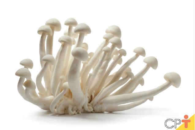 Nem todos os cogumelos podem ser consumidos, afirmam especialistas
