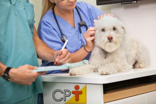 Auxiliar de Veterinário: essa profissão existe? É legalizada?   Artigos Cursos CPT