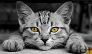 Por que alguns gatos escondem o prato de comida?